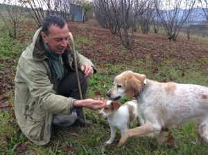 Our guide distracts the dogs with a few pieces of bread to keep them from eating the truffles